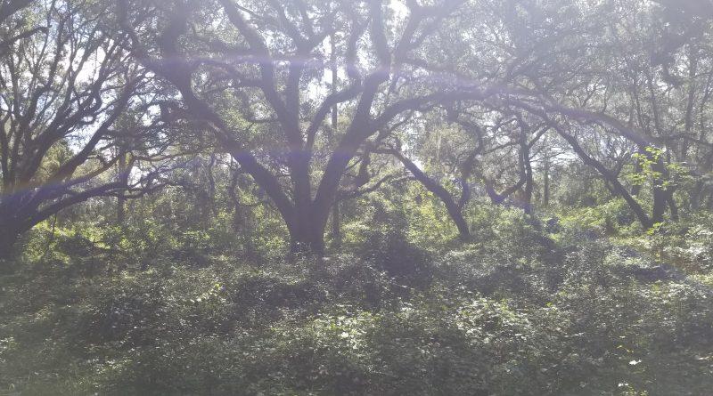 Ocala horseback trail riding